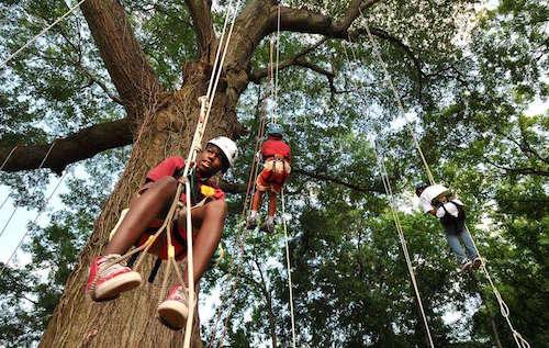 tree climb kid