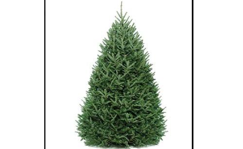 xmas-tree-recycle