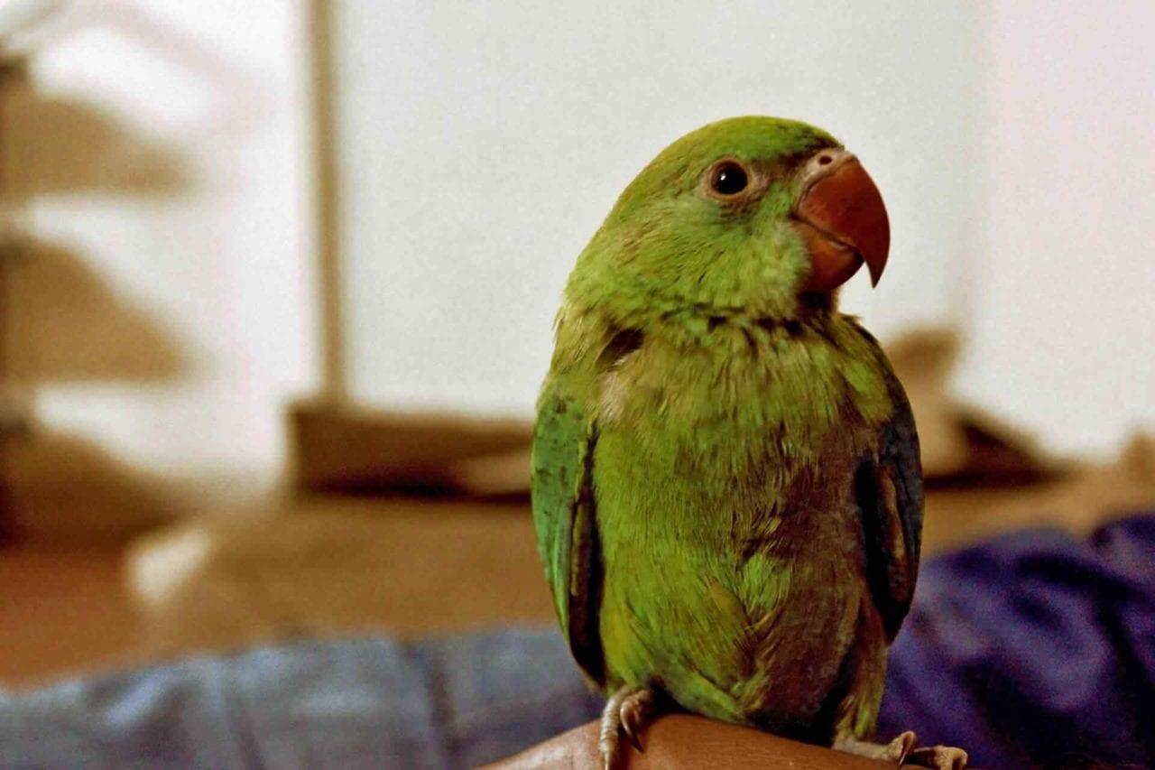 PETS-bird2-1280x853.jpg