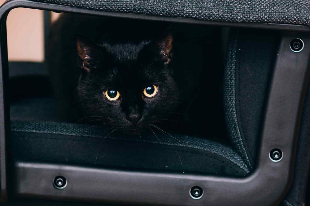 PETS-cats5-1280x853.jpg