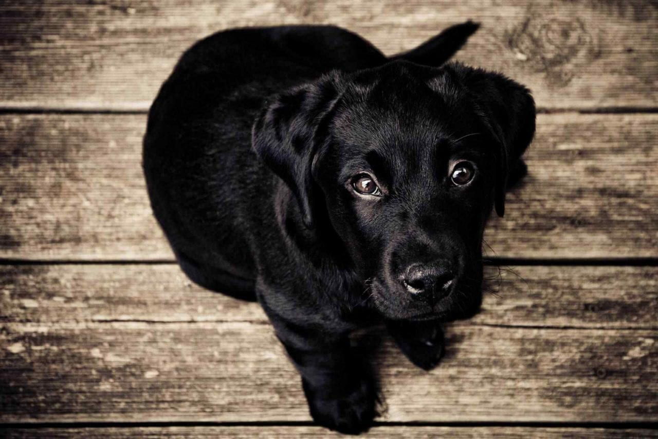 PETS-dog4-1280x853.jpg